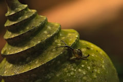 Snail overcomes stage. Snail crawling up on figure covered with moss. Snail overcomes stage Royalty Free Stock Image