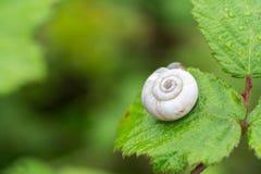 Snail på den gröna leafen arkivfoto
