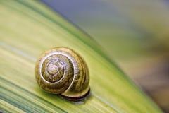Snail på den gröna leafen royaltyfria bilder