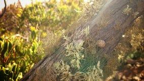 Snail på en tree Arkivfoton