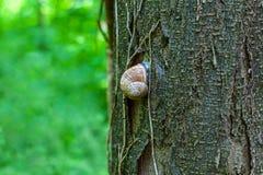 Snail på en tree arkivbilder