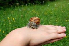 Snail på handen Royaltyfri Fotografi