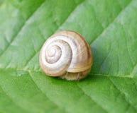 Snail på leafen Royaltyfria Foton