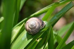 Snail på leafen Fotografering för Bildbyråer