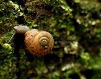 Snail på moss Royaltyfria Foton