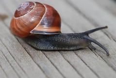 Snail på trä Fotografering för Bildbyråer
