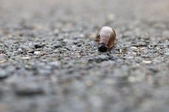 Snail på vägen Royaltyfri Fotografi