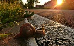 Snail på vägen royaltyfria foton