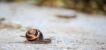 Snail på vägen Arkivbild