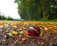 Snail på vägen Arkivfoto
