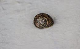 Snail på väggen Royaltyfria Foton