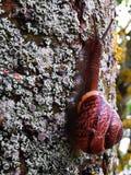 Snail p? moss royaltyfria foton