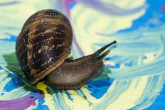 Snail on paint Royalty Free Stock Photos