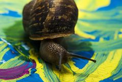 Snail on paint Royalty Free Stock Image