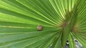 Snail on palm branch Royalty Free Stock Photos