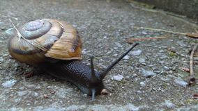 Snail. In park Royalty Free Stock Image