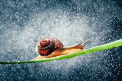 snail with particles bokeh Stock Image