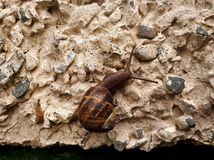 Snail on Pebble Dashed Wall Stock Images