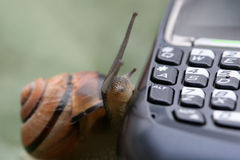 Snail on the phone Stock Photo