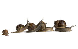 Snail Pile-Up Stock Images