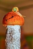 The snail on pileus of boletus. Royalty Free Stock Photography