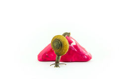 Snail and pink triangle Stock Photo