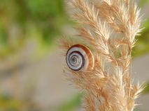 Snail on a plant stock photography