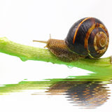 Snail on plant stem Stock Photos