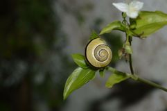 A snail. Plants out in the wild amazing features, a Royalty Free Stock Photos