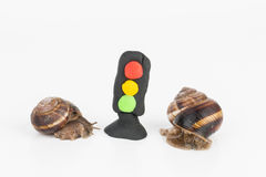 Snail and plasticine stoplight. Snail and plasticine stoplight - Stock image macro stock photography