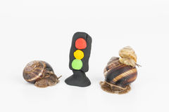 Snail and plasticine stoplight. Royalty Free Stock Photography