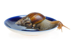 Snail on plate. Isolated on white background Royalty Free Stock Photos