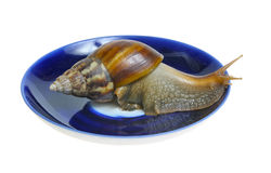Snail on plate Royalty Free Stock Photo