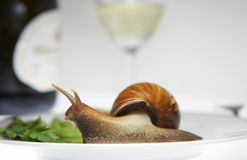 Snail on the plate Stock Photography