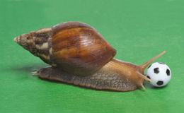 Snail playing soccer. Big snail playing the soccer Stock Photo
