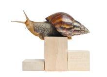 Snail on podium. Isolated on white background Royalty Free Stock Image