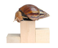 Snail on podium Stock Photography