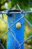 Snail on pole Stock Photos