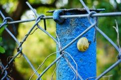 Snail on pole Stock Image