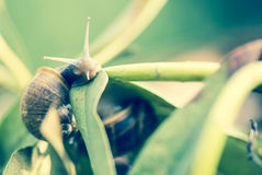 Snail with pop colors. Snail on a leaf during daylight in garden Stock Photo