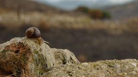Snail on the post beside road Royalty Free Stock Photography