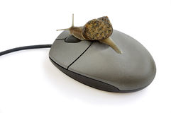 Snail pressing mouse button. Stock Photos