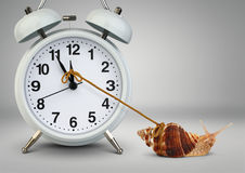Snail pulling clock hand , time management concept Royalty Free Stock Photography