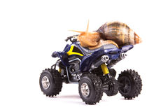 Snail on Quad Stock Photography