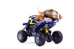 Snail on Quad 2 Stock Image