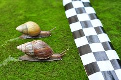 Snail race Stock Photos
