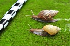 Snail race Royalty Free Stock Photo