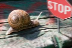 Snail race. Snail lugging on an old wood board stock photos