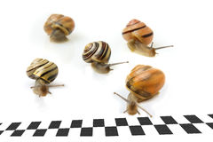 Snail Race Stock Images
