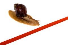 Snail race. Snail crawl towards red line Stock Photo